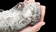 Een kat in huis: enkele tips: